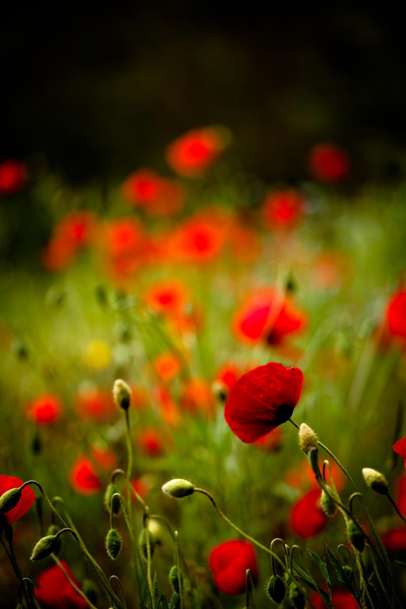 Floral Photography - Zahra Farajasri